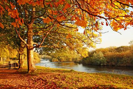 秋は抜毛の季節
