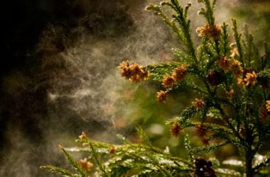 花粉の頭皮と髪への影響