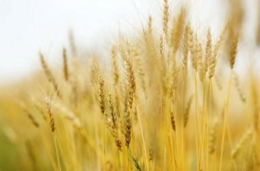 自宅で出来る!小麦シャンプーの作り方