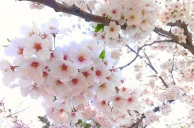 春に起きやすい髪トラブル