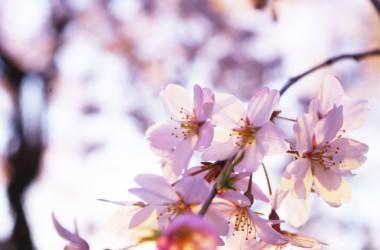 花粉の髪へ影響