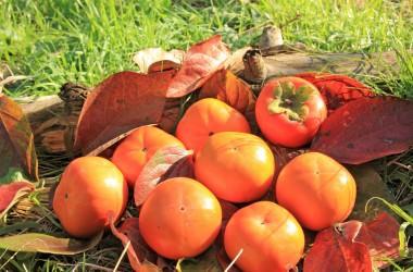 秋の味覚・柿のヘアケア効果