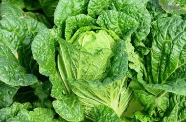 代謝を活性化させる「広島菜」のヘアケア効果とは