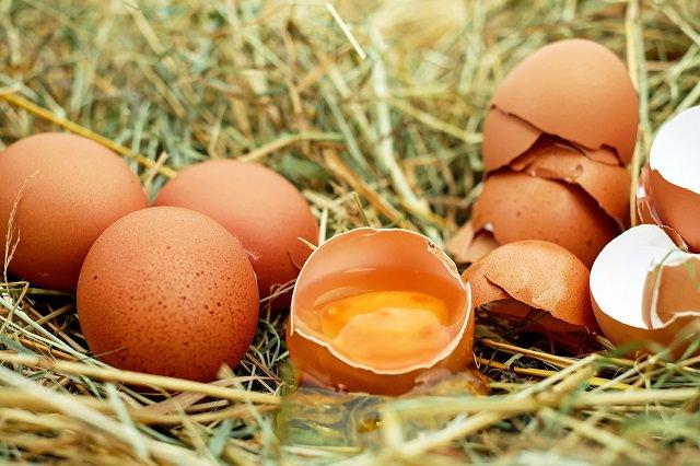 卵の薄い皮「卵殻膜」には薄毛対策が出来るの?