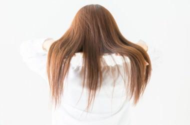 毛は抜けて生まれ変わり、毛の総本数を維持する