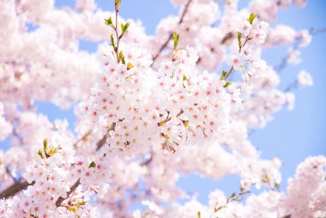 春に多い頭皮トラブル