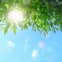 飲む日焼け止めで髪を紫外線から守ろう!