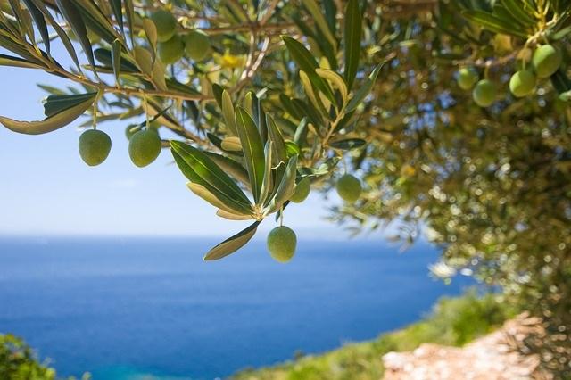 イタリアのオーガニック認証取得「高品質・低価格」の本格ヘアケア〈PIANTE FELICI〉って知ってる?