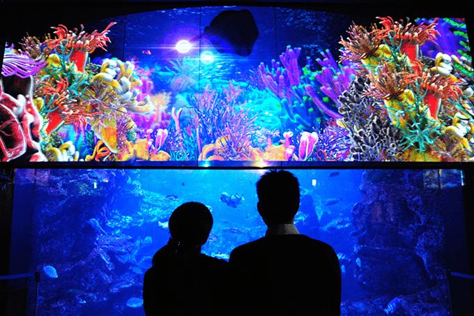 水族館デートに似合うヘアスタイルtop